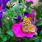 butterfly on flowers by Gale Distler