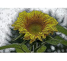 Sunflower Color Engraving Treatment Photographic Print