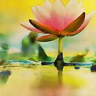 Golden Waterlily by Bunny Clarke
