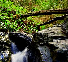 Dimond Trail 3 by Bob Moore