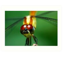 Insectopia by Jules Campbell Art Print