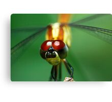 Insectopia by Jules Campbell Metal Print