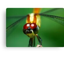 Insectopia by Jules Campbell Canvas Print