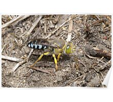 Sand Wasp Poster