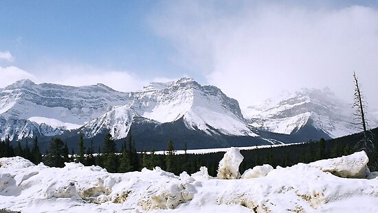 Along the Icefields Highway by Tiffany Vest