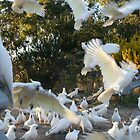 Taking Flight: Cockatoos by Kezzarama