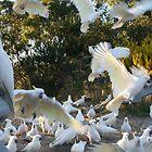 Taking Flight: Cockatoos by Kezzarama