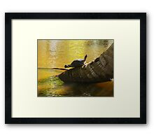 Pond Turtle Clapping Her Feet ?  (Samana) Framed Print