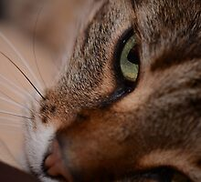 Cats Eye by Izzy83