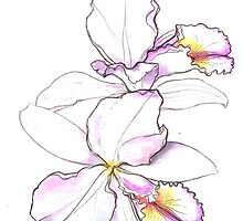 Orchid, beauty flowers by MariaDiaz