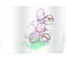 Orchid, beauty flowers Poster