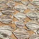 Fish are laid out to dry in the sun. by stuwdamdorp