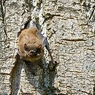 Pipistrello, Lago Chiusi, Toscana, Italia by Andrew Jones