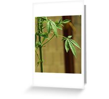 the green  Greeting Card