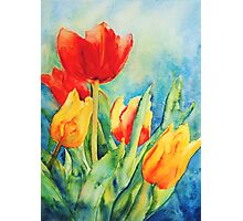 Primary Tulips Photographic Print