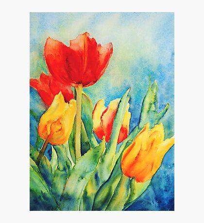 Primary Tulips Photographic Print