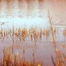 Yellow reeds by Dawn Ostendorf