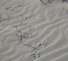 Wandering Bird-feet by Kinniska