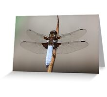 Broad bodied chaser male (Libellula depressa) Greeting Card