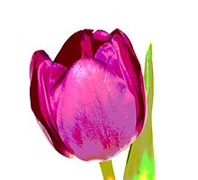 Purple tulip pop art by Ashley Beolens
