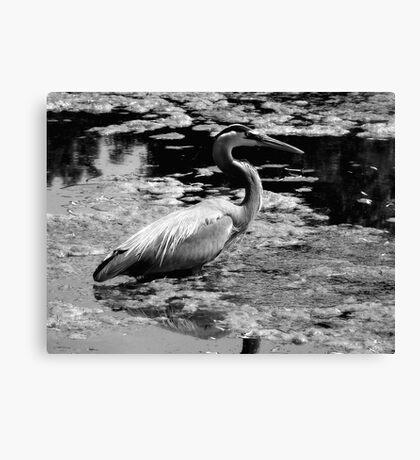Blue Heron Black&White Canvas Print