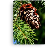 Fir Cone Canvas Print