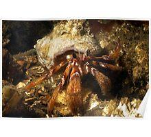Hermit Crab Poster