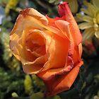 Birthday Rose by Monnie Ryan