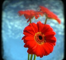 Red Gerberas 02 by Karen Harries