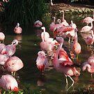 Flamingos by DanniiD