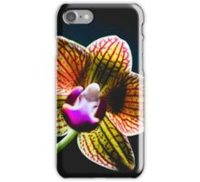Isolated orchid bloom iPhone Case/Skin