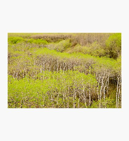 Spring Foliage. Photographic Print