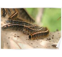 Army worm nest Poster