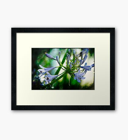 Morning's Delight with Texture Framed Print