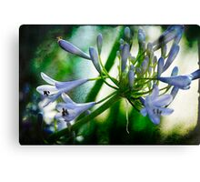 Morning's Delight with Texture Canvas Print