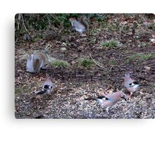 Three Jays.............oh and two squirrels  Canvas Print