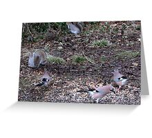 Three Jays.............oh and two squirrels  Greeting Card