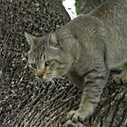 Pappa Cat Waiting in the Tree by Navigator