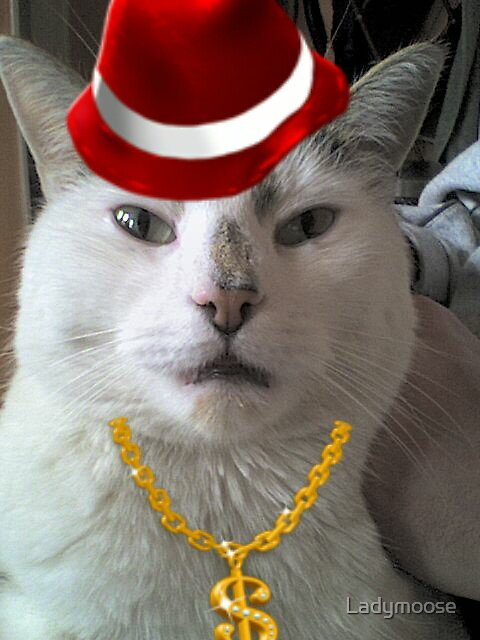 PIMP MY CAT by Ladymoose