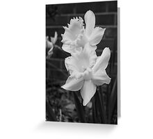 Daffodils Greeting Card