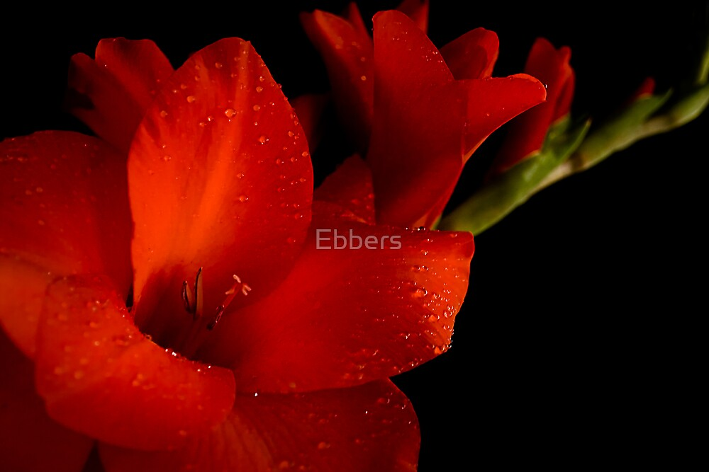 Play Our Song by Ebbers