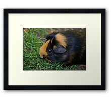 Ready for my close up darling... Framed Print