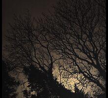 Light in the Dark by wayfarer
