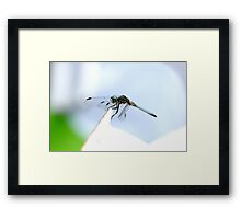Perched Blue Dasher Dragon Framed Print