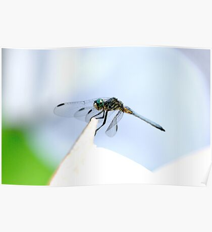 Perched Blue Dasher Dragon Poster