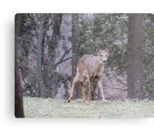 Okauchee Lake Deer Metal Print