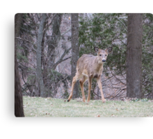Okauchee Lake Deer Canvas Print