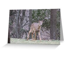 Okauchee Lake Deer Greeting Card
