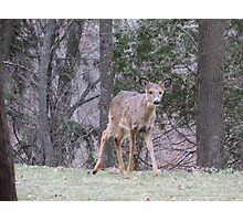 Okauchee Lake Deer Photographic Print