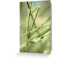 Green Tangle © Greeting Card